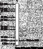Histone H2A Polyclonal Antibody