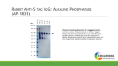 Rabbit Anti-<wbr/>S tag IgG:Alkaline Phosphatase