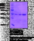SET7/9 (human recombinant)