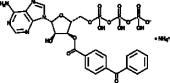 BzATP (ammonium salt)