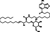 C12 NBD Galactosylceramide (d18:1/6:0)