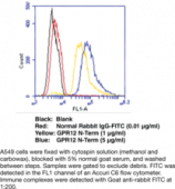 GPR12 (N-<wbr/>Term) Polyclonal Antibody