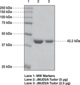 JMJD2A tudor domains (human recombinant)