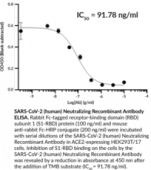 SARS-CoV-2 (human) Neutralizing Recombinant Antibody