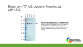 Rabbit Anti-<wbr/>T7 IgG:Alkaline Phosphatase