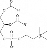 Phosphatidyl<wbr/>cholines (bovine)