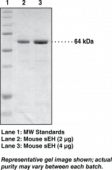 Soluble Epoxide Hydrolase (mouse recombinant)