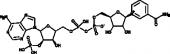 NADP<sup>+</sup> (hydrate)