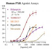 Human PXR Reporter Assay System, 1 x 96-well format assay