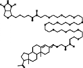 Progesterone 3-<wbr/>PEG<sub>11</sub>-<wbr/>biotin