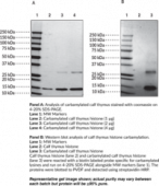 Carbamylated Core Histones (bovine)