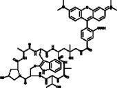 Phalloidin-Tetramethylrhodamine Conjugate