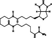 Biotin-<wbr/>XX hydrazide