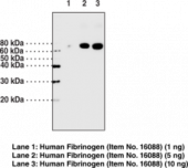 Fibrinogen (α chain) Polyclonal Antibody