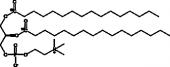 1,2-<wbr/>Dipalmitoyl-<wbr/><sup>13</sup>C-<em>sn</em>-<wbr/>glycero-3-PC