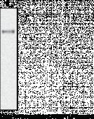 ANGPTL3 (mouse) Monoclonal Antibody (Clone Kairos3-<wbr/>1541)