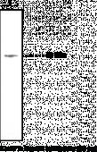 LPA<sub>3</sub> Polyclonal Antibody