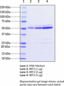 IRF3 (human recombinant)