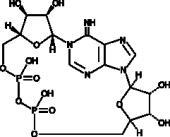 Cyclic ADP-Ribose (ammonium salt)