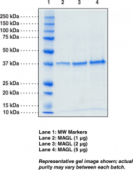 Monoacyl<wbr/>glycerol Lipase (human recombinant)