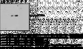 Histone H3K4Me2 Monoclonal Antibody