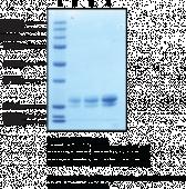STING H232 variant (human, recombinant)