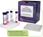 Mouse GR Reporter Assay System, 3 x 32 assays in 96-well format