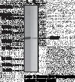 SIRT7 Polyclonal Antibody