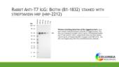 Rabbit Anti-<wbr/>T7 IgG:Biotin
