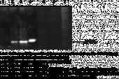Histone H3K4Me2 Polyclonal Antibody