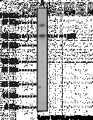 NF-<wbr/>κB (p65) Polyclonal Antibody (aa 538-<wbr/>546)