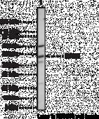 IRAK-<wbr/>4 Polyclonal Antibody