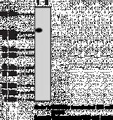 DNA Methyl<wbr>transferase 3a Monoclonal Antibody (Clone 64B814.1)