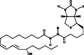 13(S)-<wbr/>HODE-<wbr/>biotin
