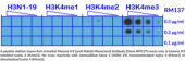 Anti-trimethyl Histone H3 (Lys4) Rabbit Monoclonal Antibody (Clone RM137)