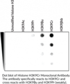 Histone H3K9Cr Monoclonal Antibody
