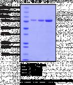 TG2 (human recombinant)