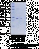 SET8 (human recombinant)