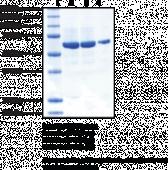 cGAS (human recombinant)
