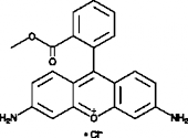 Rhodamine 123 (chloride)