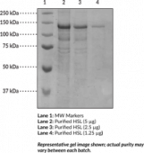 Hormone-Sensitive Lipase (human, recombinant)