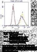 Cytokeratin Monoclonal FITC Antibody (Clone C-<wbr/>11)