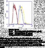 GPR12 (C-<wbr/>Term) Polyclonal Antibody