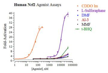 Human Nrf2 Reporter Assay System, 3 x 32 assays in 96-well format