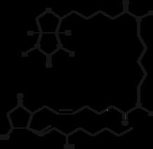 Prostaglandin E<sub>2</sub>-<wbr/>biotin