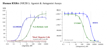 Human RXRα Reporter Assay System, 3 x 32 assays in 96-well format