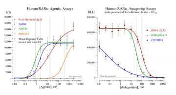 Human RARα Reporter Assay System, 3 x 32 assays in 96-well format