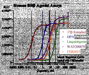 Human ERβ Reporter Assay System, 3 x 32 assays in 96-well format