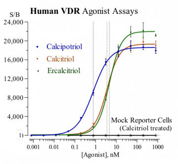 Human VDR Reporter Assay System, 3 x 32 assays in 96-well format