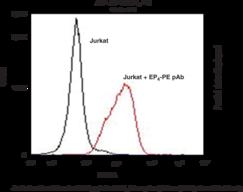 EP<sub>4</sub> Receptor (C-<wbr/>Term) Polyclonal PE Antibody